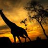 X-Fighters Warriors Roar Through African Wilderness
