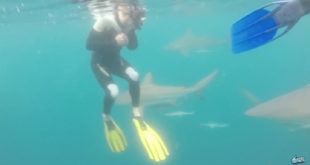 Nitro Circus athletes Travis Pastrana, Dusty Wygle and Harry Bink took the opportunity while in South Africa to go diving with sharks, only without the cage!