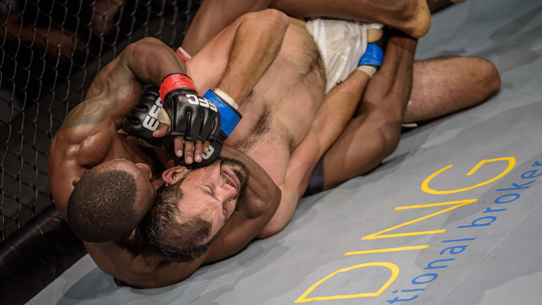 Results from all 12 MMA fights from EFC 84